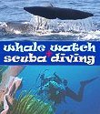 whale + dolphin safaries, scuba diving centres